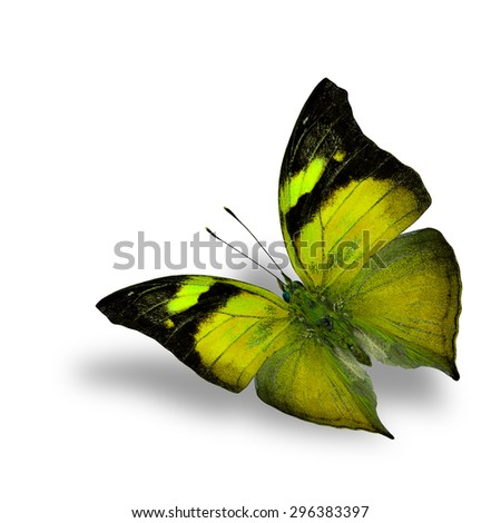 The beautiful flying yellow butterfly on white background with shadow beneath - stock photo