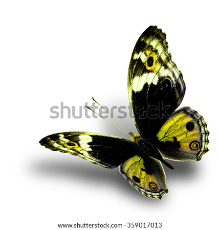 the beautiful flying yellow butterfly with nice soft shadow beneath on white background, blue pansy butterfly in fancy color profile - stock photo