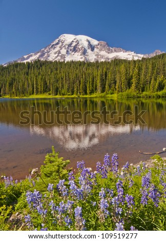 The beautiful reflection of Mt Rainier in the reflection lake - stock photo