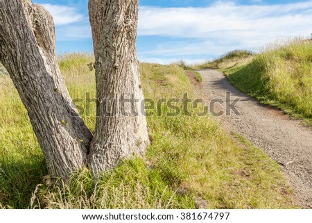 The beautiful scene of walking track beside alone tree on Auckland's Mount Eden. - stock photo