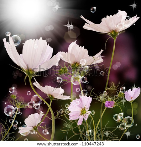 The beautiful spring flower over dark background - stock photo