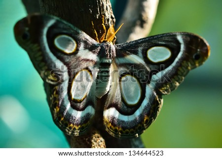 The beauty of a moth  - A moth lying in the sun - stock photo