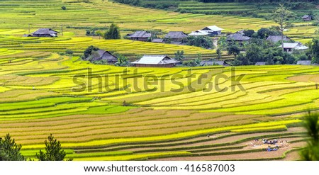 The beauty of terraced fields roofs interspersed inside village, far away from group harvesting rice. Rural Scene Vietnam so simple how - stock photo