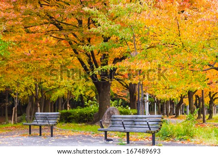 The benches which are near walking road in park. An autumn season  - stock photo