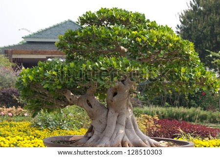 the best bonsai in the garden - stock photo
