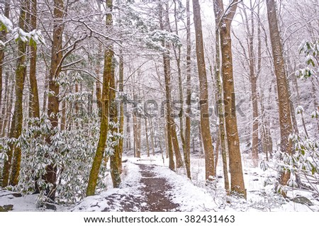 The Big Creek trail in the Smoky Mountains During a Spring Snow - stock photo