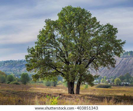 The big old lonely oak tree on a  meadow against the sky - stock photo