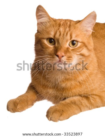 The big red cat on white background - stock photo