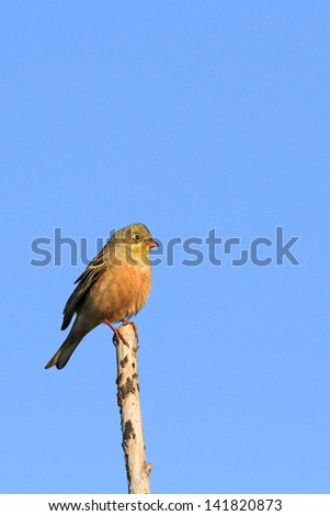 The bird sits on a branch against the sky - stock photo
