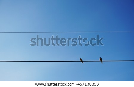 The birds resting on the cable wire in clear blue sky background. - stock photo