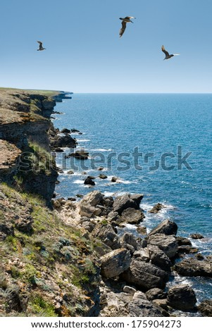 The Black Sea, rocks, sea gulls, sunny day. - stock photo