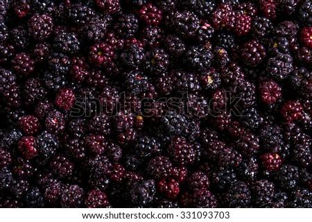 "The blackberries (singular, blackberry; genus Rubus, subgenus Eubatus; also called bramble or occasionally ""bramble raspberry""). - stock photo"