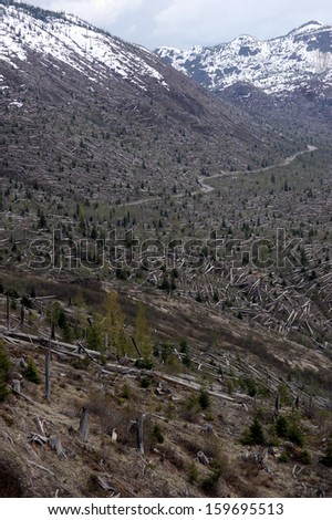"""The 1980 """"blast zone"""" that resulted from the eruption of Mount St. Helens - stock photo"""