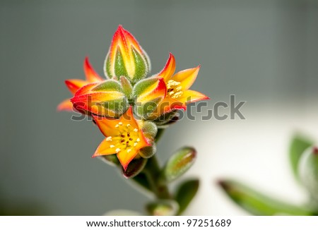 The blooming flower - stock photo