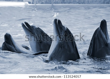 The bottle-nosed dolphins in aquarium. Closeup - stock photo