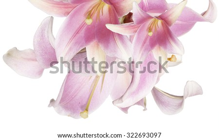 The  bouquet pink lily on a white background - stock photo
