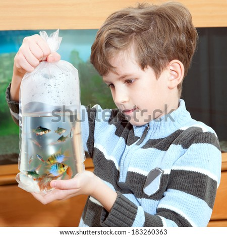 the boy looks aquarium  fish in the package - stock photo