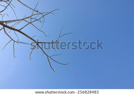 The branch is on the sky - stock photo