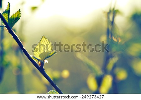 The branch of Alder tree in forest. - stock photo
