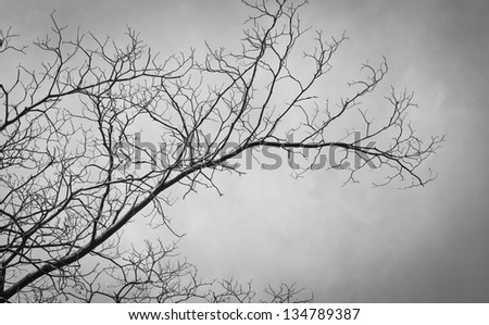 The branches of tree black and white - stock photo