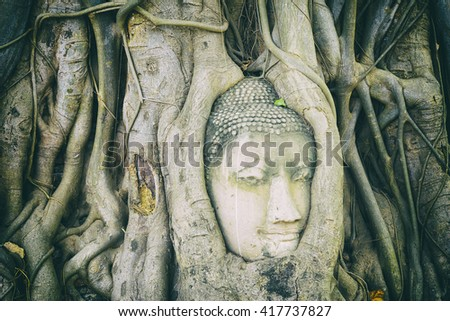 the Buddha head in the root at Ayuthaya,Thailand - stock photo