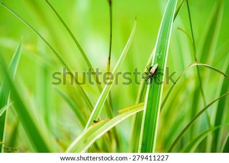The Bug - stock photo