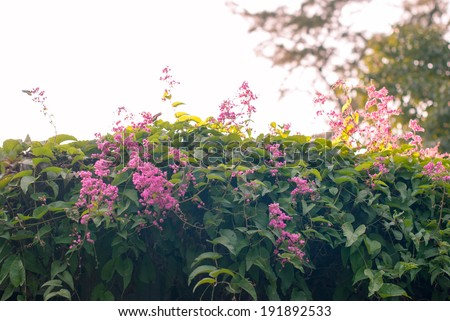 The butterfly in the garden - stock photo