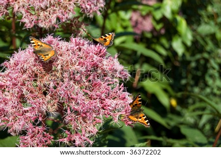 The butterfly on a lilac flower - stock photo