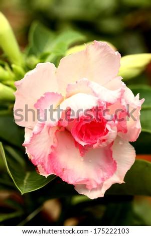 The cactus flower - stock photo