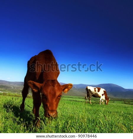 The calf on the background of the mountain scenery in the summer - stock photo