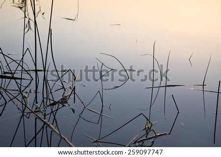 The canes and reflection on the coast of lake at sunset. Beautiful summer landscape - stock photo