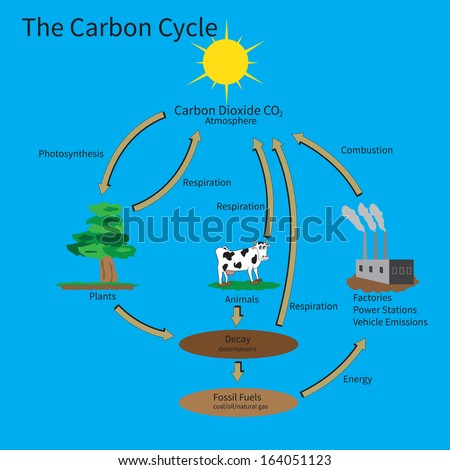 The Carbon Cycle showing how carbon is recycled in the environment. - stock photo