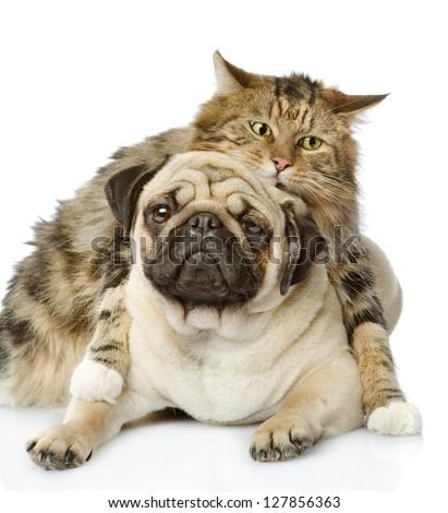 the cat hugs a dog. isolated on white background - stock photo