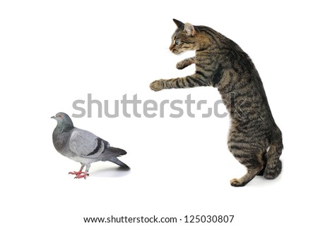 the cat hunts on a dove - stock photo