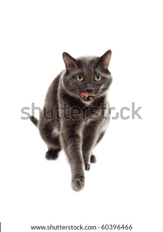 The cat is isolated on a white background - stock photo