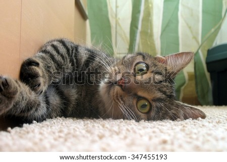 The cat is lying at home - stock photo