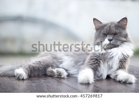 The cat is on the table In the background blurred colorful cute cats close up funny playful young cat , domestic cat cat cat relaxing Cats play at home relaxing , elegant cat 1 - stock photo