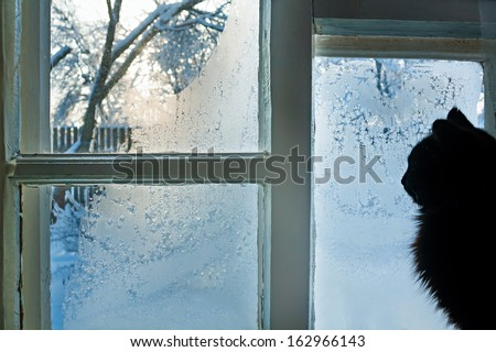 the cat looks at the street through the frozen winter window - stock photo