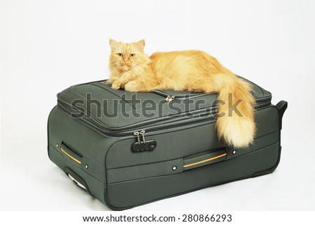 the cat on the bag - stock photo