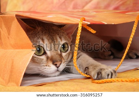 The cat plays in the package - stock photo