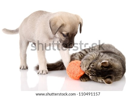 the cat plays with a dog. isolated on white background - stock photo
