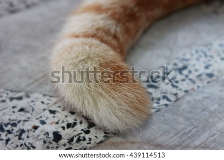 the cat tail - stock photo