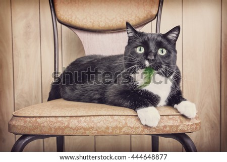 The cat that ate the bird - stock photo