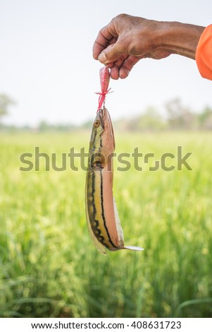 the Catfish on fishing-rod on rural field background  - stock photo