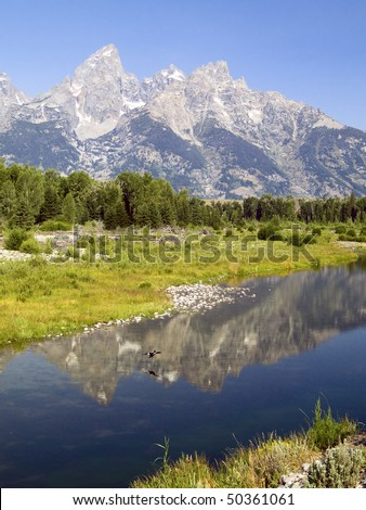 The Cathedral Group of the Grand Tetons reflected in the Snake River as a duck lands on the water at Schwabacher's Landing, Wyoming. - stock photo