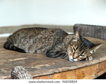 The charming, gray kitten during sleep - stock photo