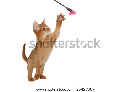 The cheerful cat plays on a white background - stock photo