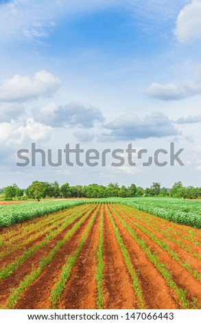 The chili farm. - stock photo