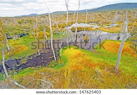 The Chocolate Swamp on Stewart Island in New Zealand - stock photo