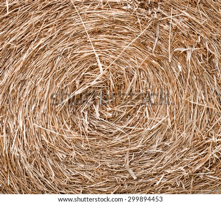 the circle roll of rice straw - stock photo